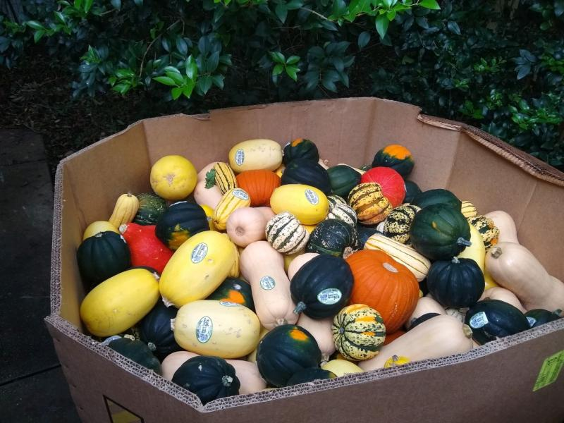 650 Pounds Squash for Bins 09-20-20